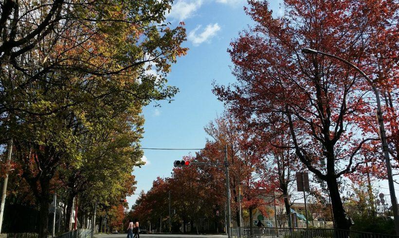 北千里の三色彩道