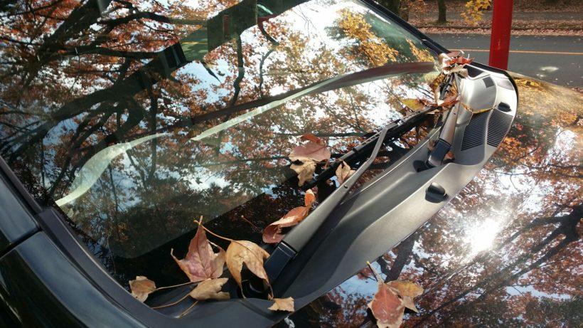 打合せから戻ると、フロントガラスが落ち葉だらけ...